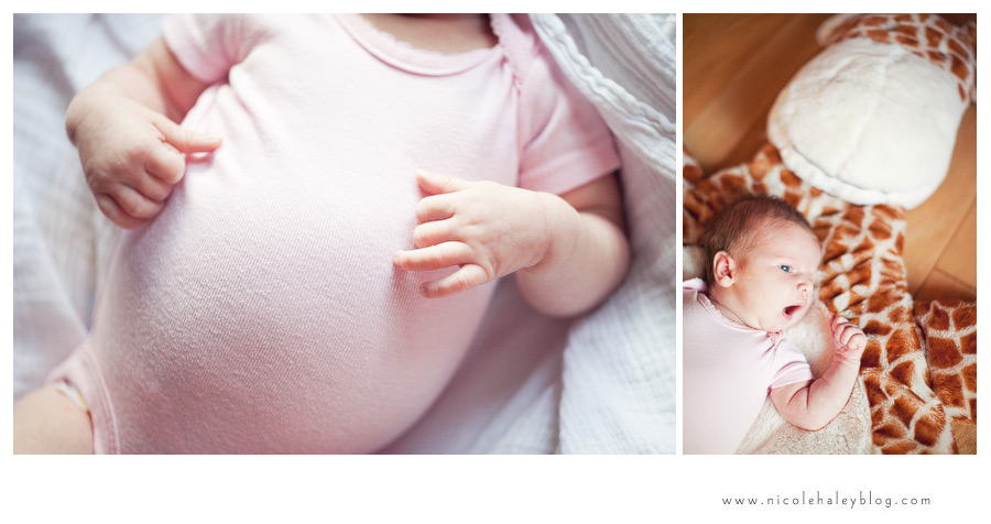 nicole haley photography, ann arbor child photography